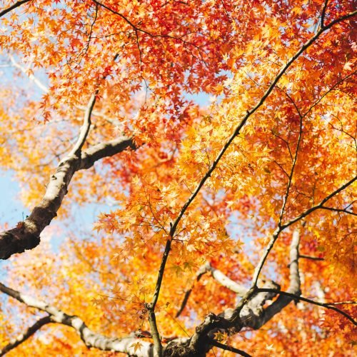 brown and yellow tree leaves