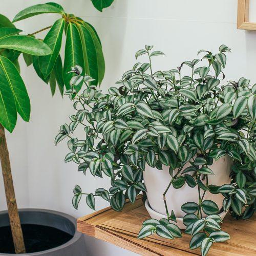 houseplants in a corner