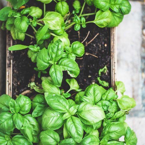 plant in soil pot