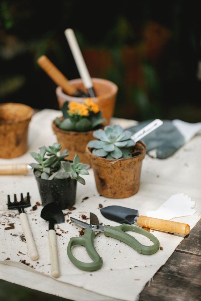 potting plants on table