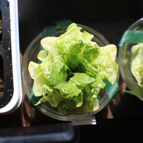 vegetable in container