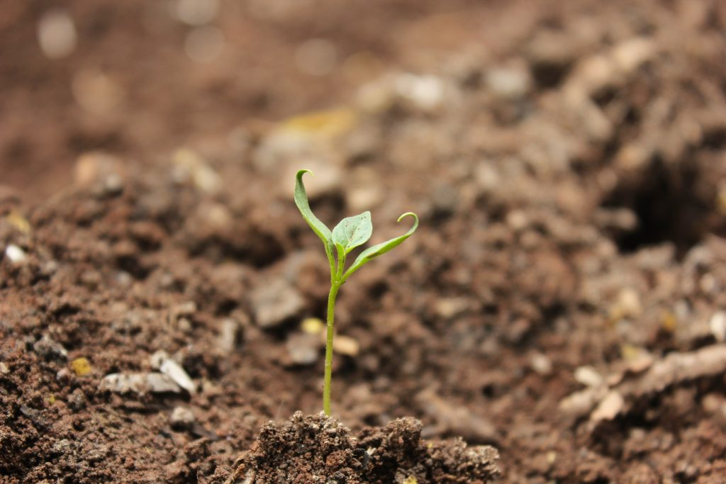 Seed Bomb in soil