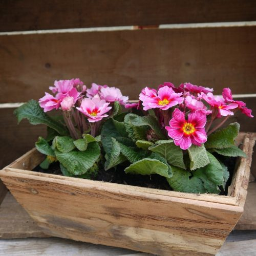 Wood container flowers