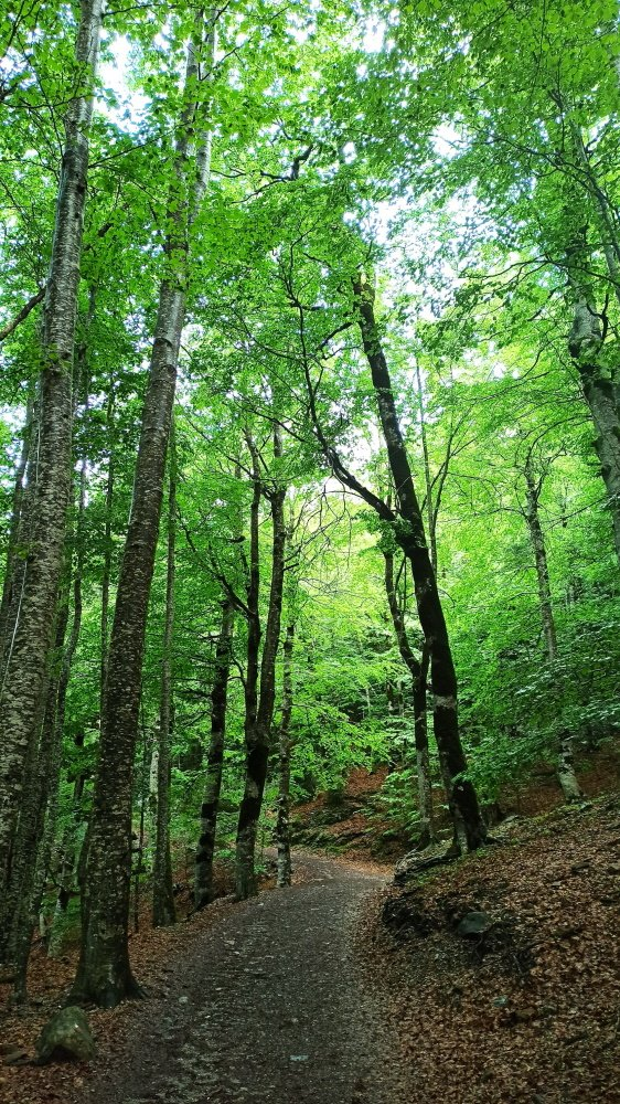 forest hiking trail