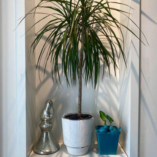 houseplant aesthetic
