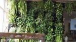 indoor green wall gardenstead