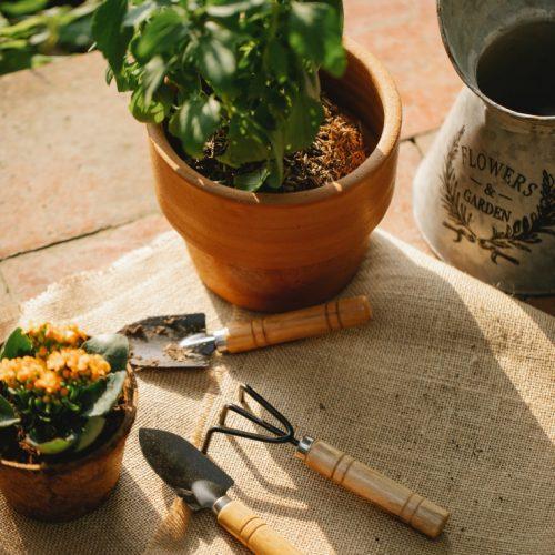 Houseplants on table