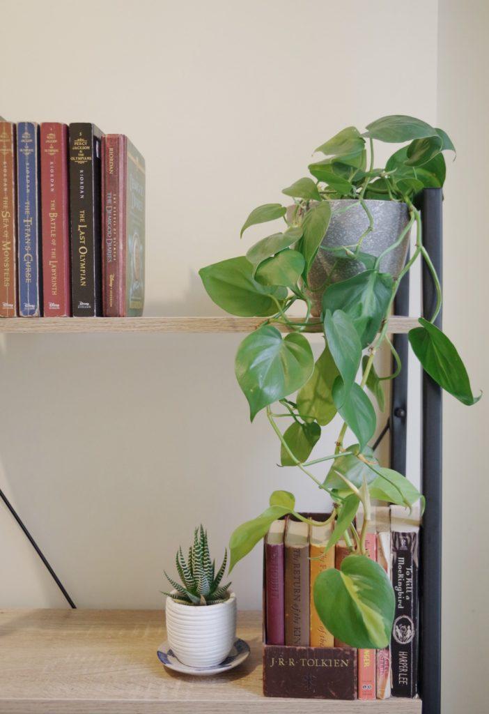 Plant shelf with books