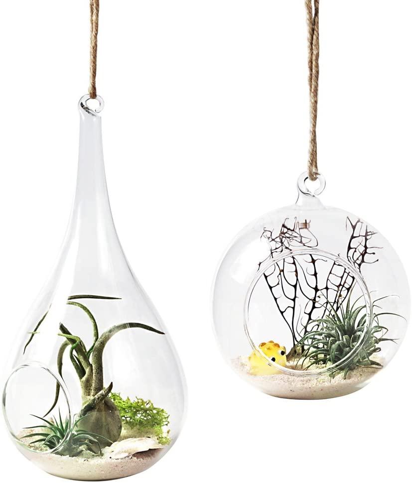 Terrarium Plant Hangers