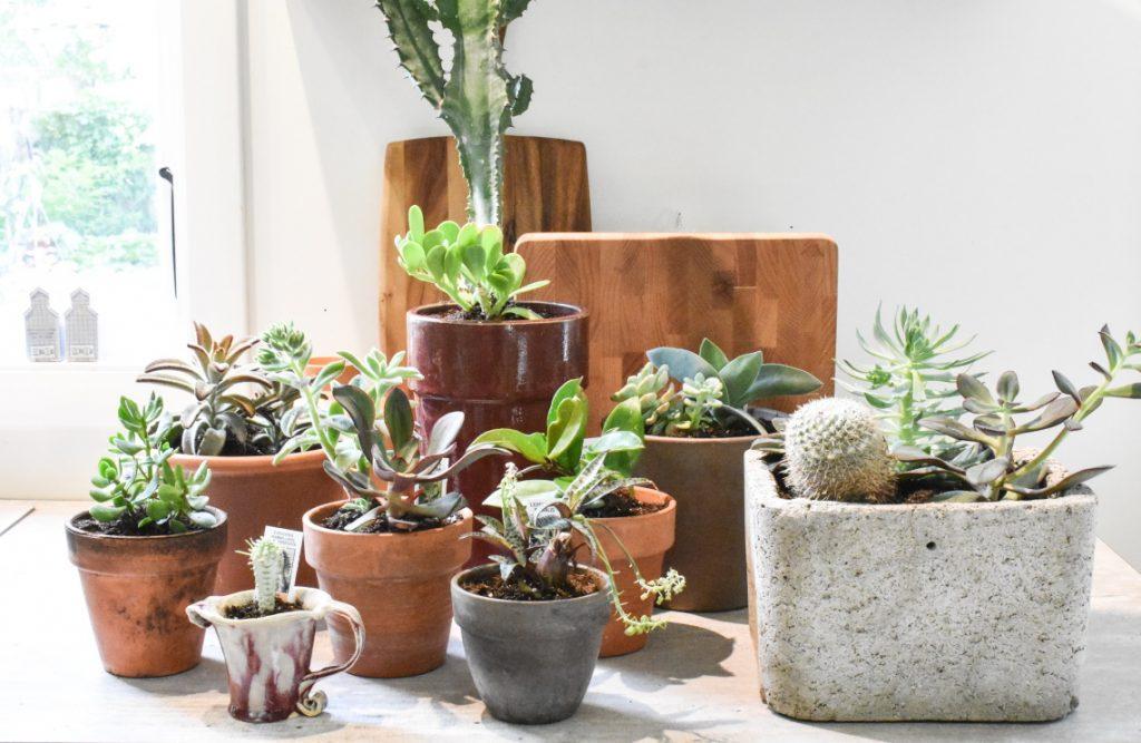 assorted houseplants display