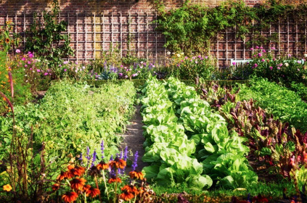 succession planting garden