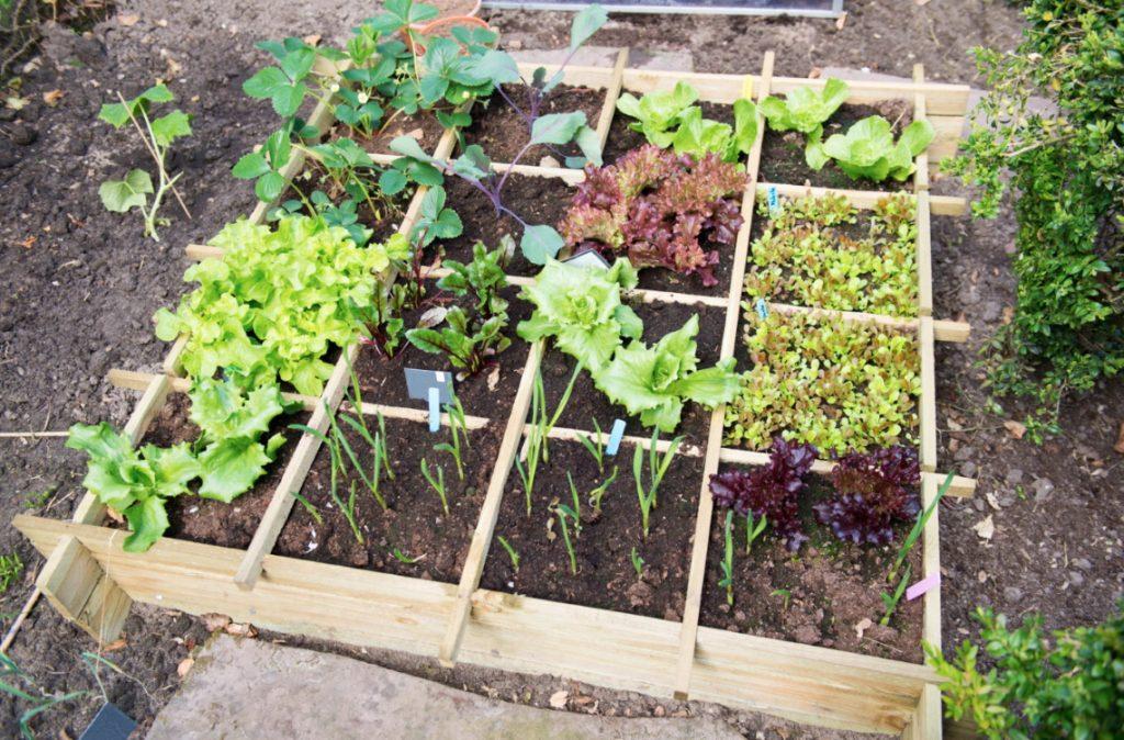 succession planting raised bed