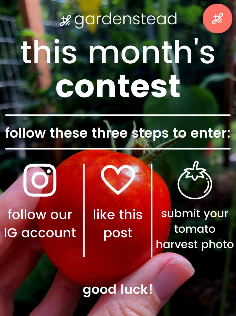 gardenstead tomato harvest contest