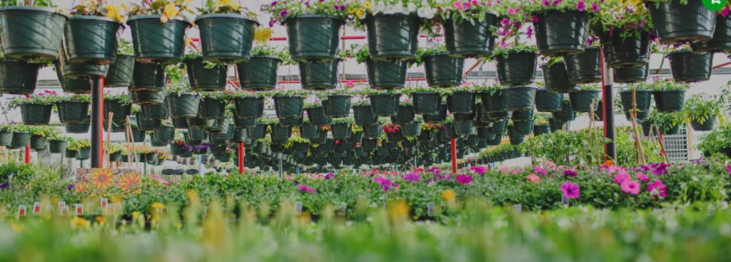 braeheid gardens