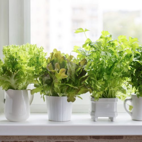 herb containers indoors ledge