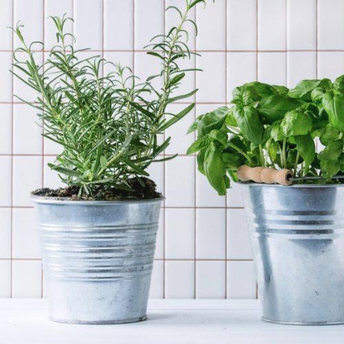 herb garden indoors