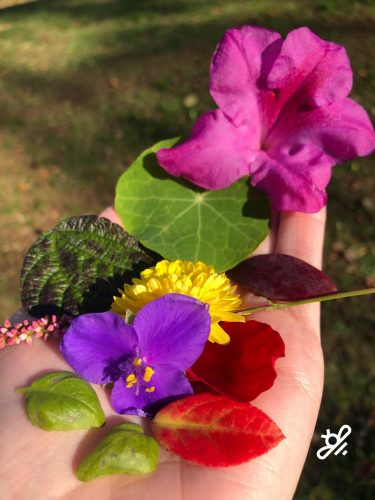 flowes and leaves from the garden