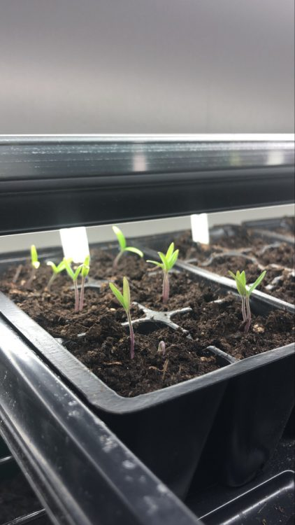 seedlings close